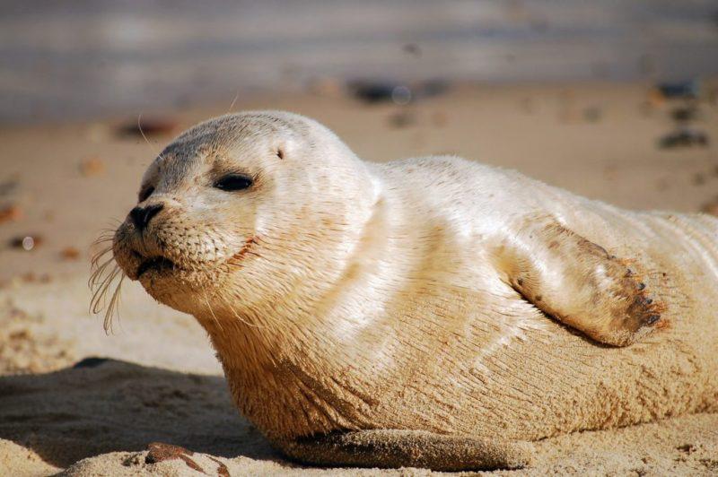 20 fotografías que te harán enamorarte del océano - fotografias-que-te-haran-enamorarte-del-oceano-google-fotos-google-zoom-online-google-meet-instagram-naturaleza-animales-en-peligro-de-extincion-oceano-cuidado-por-el-oce-17