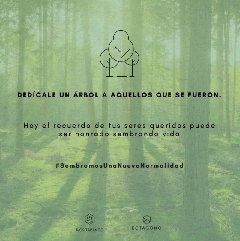 ¿Te gustaría tener un árbol con tu nombre? Descubre cómo aquí - bautiza-a-un-arbol-con-tu-nombre-descubre-como-puedes-participar-en-una-reforestacion-virtual-en-la-ciudad-de-mexico-2