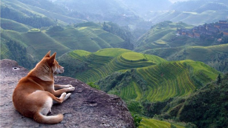 5 tips para tomar una buena foto - dogs-photography-photo-photographer