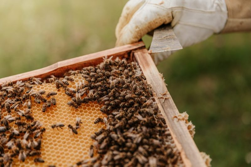 HOTBOOK Ecotalks x Tom's of Maine: la importancia de las abejas - bianca-ackermann-ys-szzkdt1s-unsplash