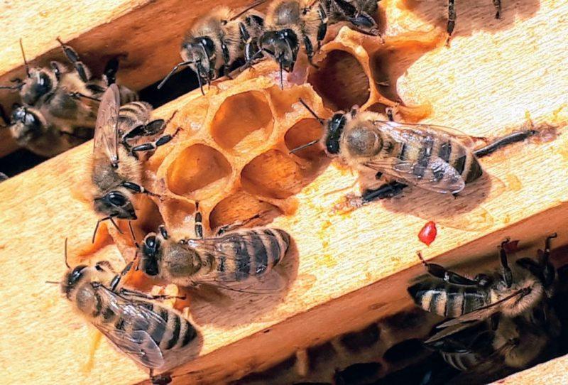 HOTBOOK Ecotalks x Tom's of Maine: la importancia de las abejas - boba-jaglicic-txa8cgfnfnq-unsplash
