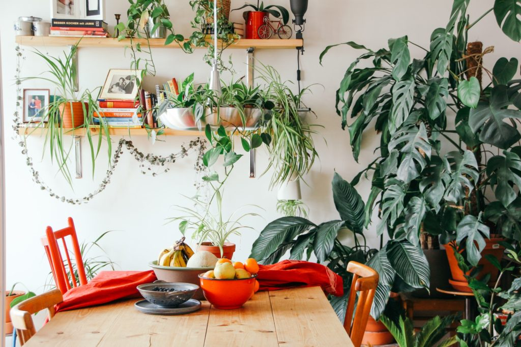 Go green! Plantas para tener un imperdible jardín interior
