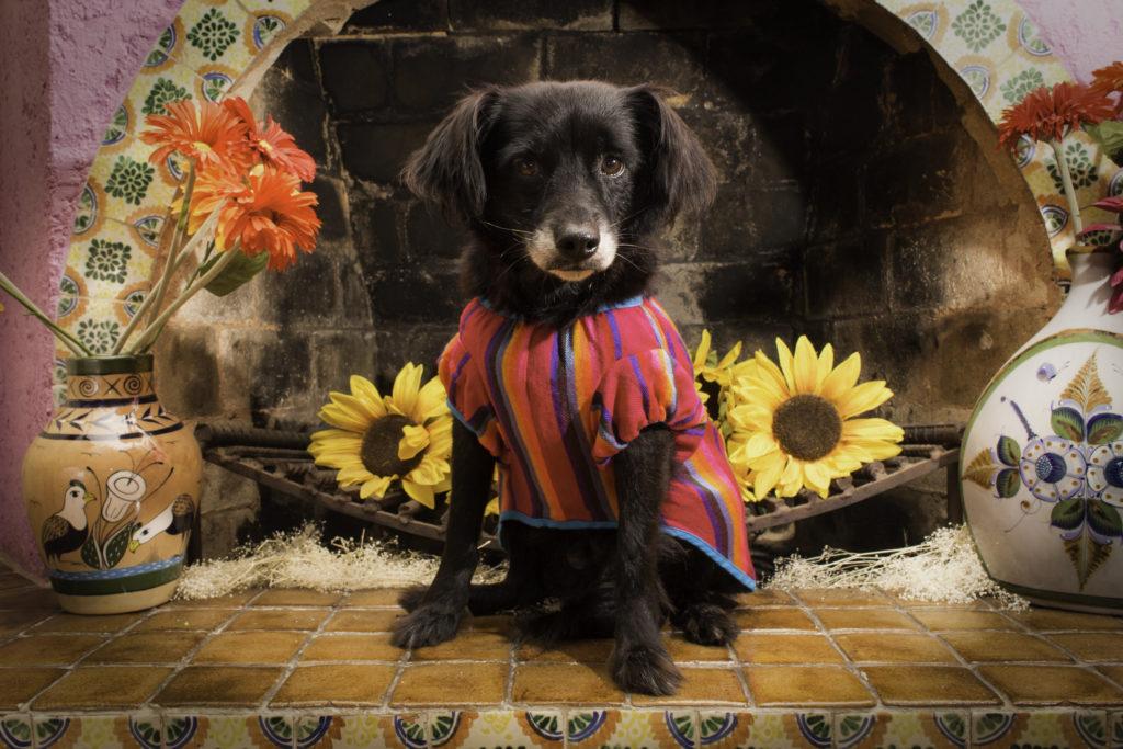 La línea mexicana que tiene todo para tus mascotas: El Rebozo de Dolce