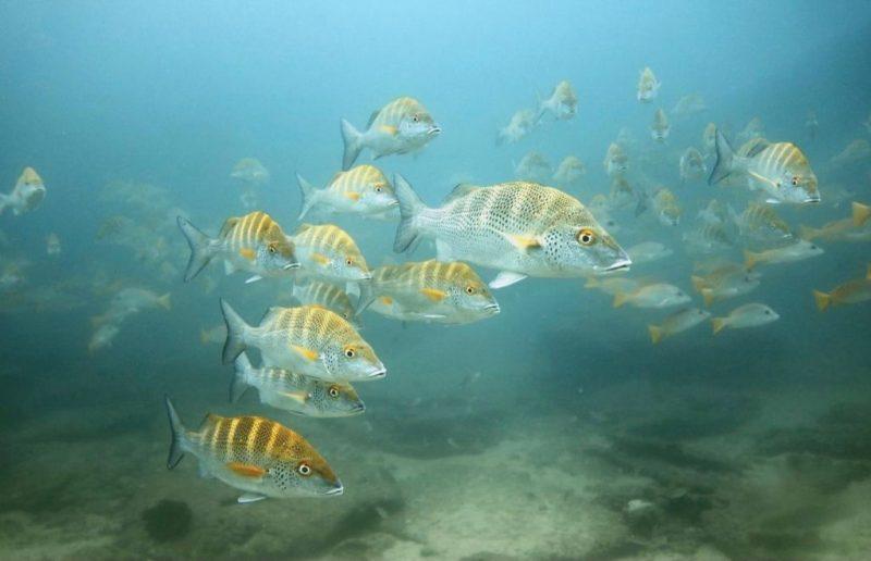 Impactantes fotografías de la vida marina, un mundo bajo el agua repleto de magia - foto-11-dia-del-oceano-google-amazon-dia-del-oceano-fernanda-narchi