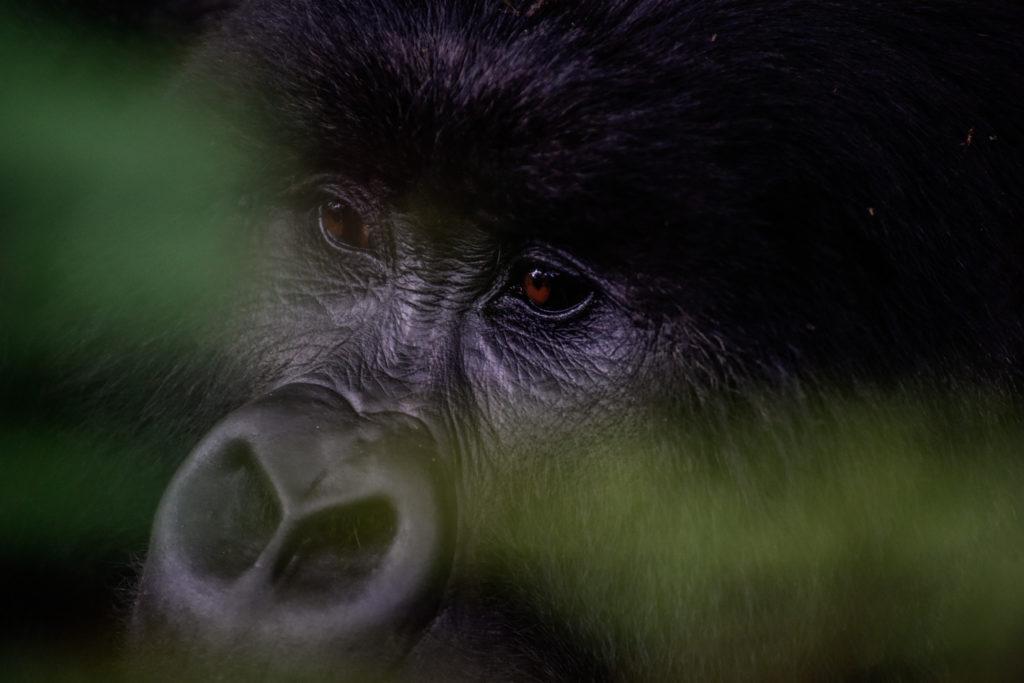 ¡Descubre Ruanda! Los #HOTspots que no puedes dejar de visitar en este gran destino