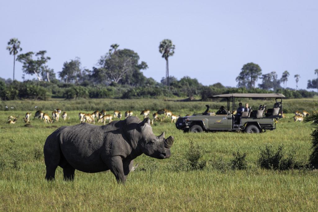 HOT spots en África que no puedes pasar por alto con Wilderness Safaris