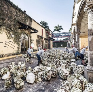 Jose Cuervo Express: un tour por la ruta del tequila - agave