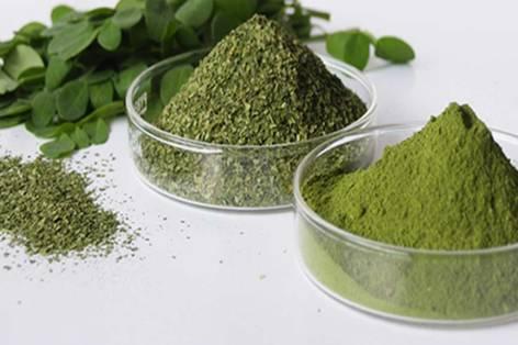 7 superfoods para fortalecer tu sistema inmunológico - neem-7-super-foods-para-elevar-tu-sistema-inmunologico