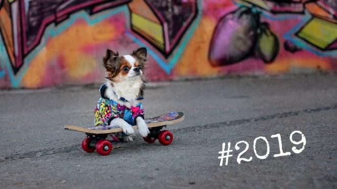 2019-dog-on-skateboard-cool-dog-dawg-hotdog-marketing