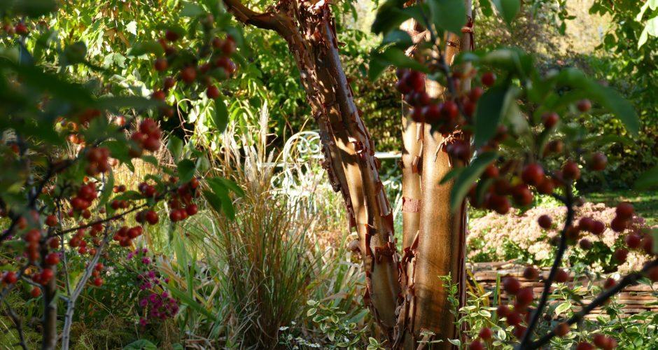 jardin et érable
