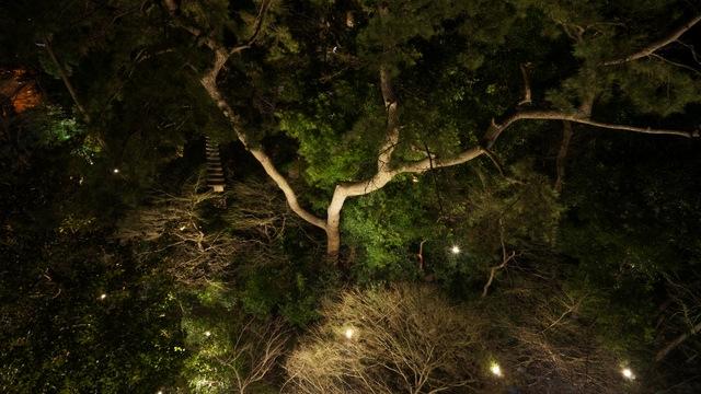 シェラトン東京_夜景