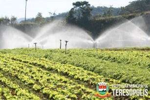A grande produção de hortaliças localizada em Teresópolis, abastece a baixada fluminense, a capital e ainda outras cidades.