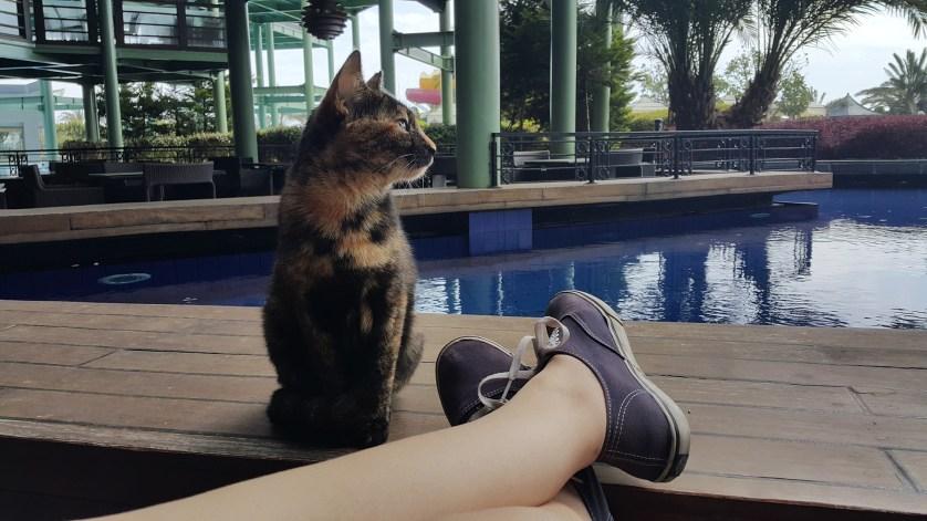 Gato em Hotel com Piscina