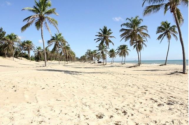 imagem-de-praia-com-areia-branca-e-coqueiro