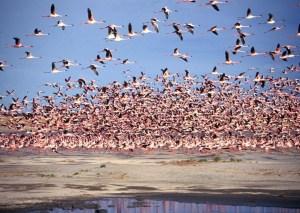 imagem-de-flamingos