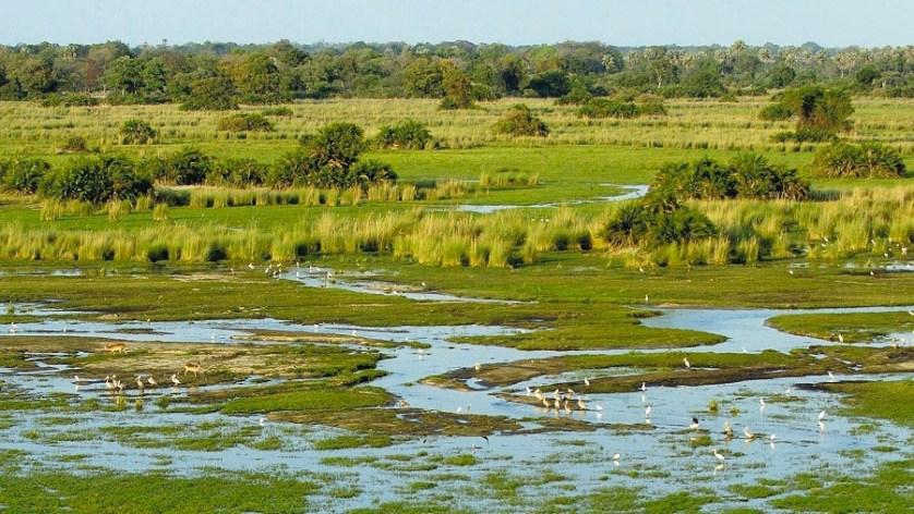 imagem-de-pantanal