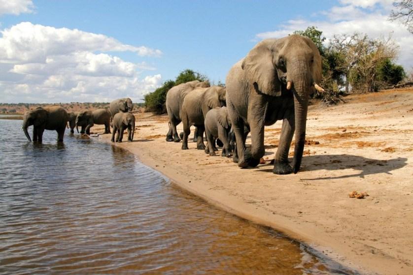imagem-de-elefantes-a-beira-rio