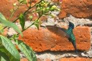 Quito destaca como destino biodiverso y  único