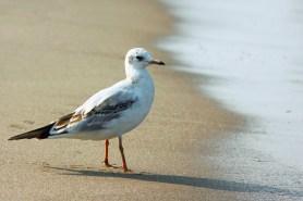 seagull-814112_1920