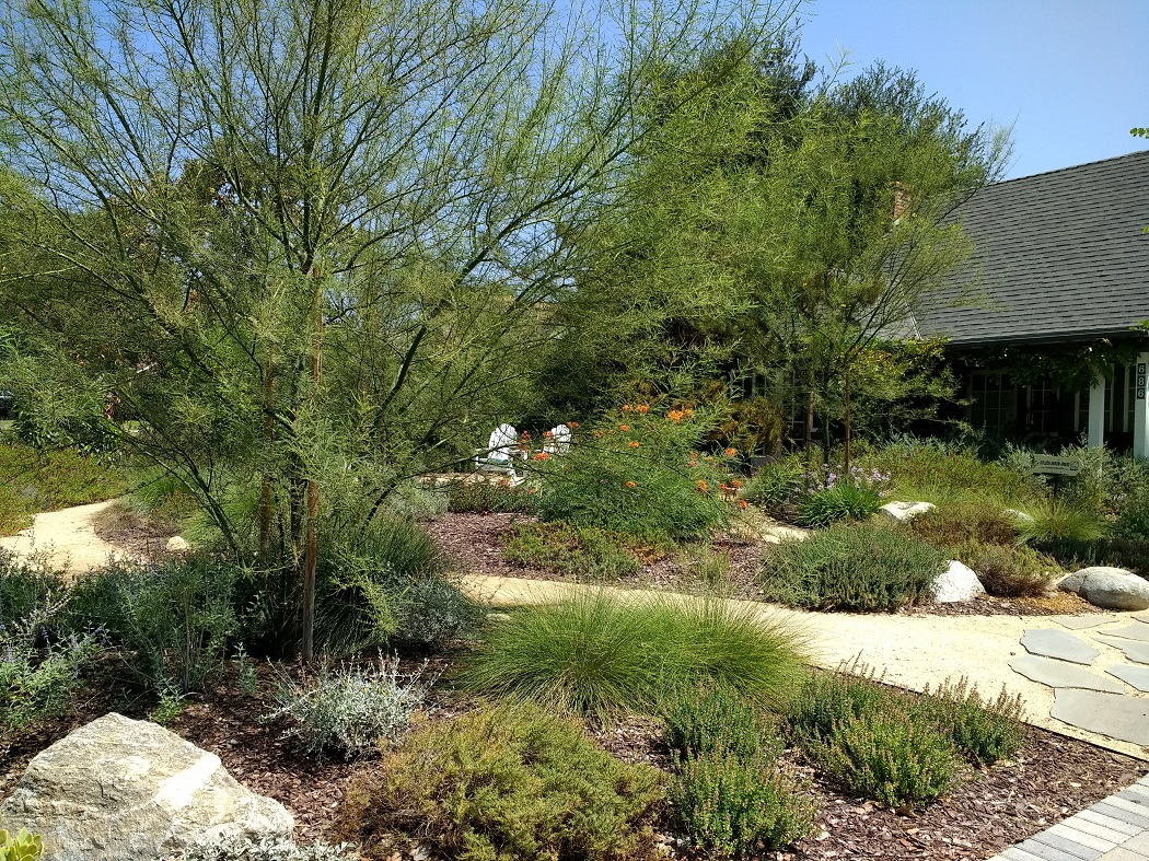 Gardening In Hot Dry Climates