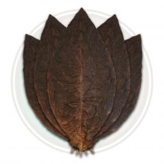 CT leaf