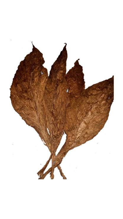 CT Fronto