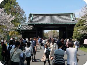 皇居乾門の桜の通り抜け一般公開(2019春)をレポート!混雑や開花状況を調査!