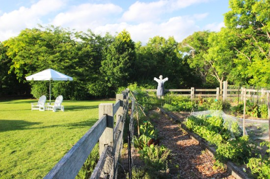 One of three vegetable gardens and there's a scarecrow dressed as a chef!