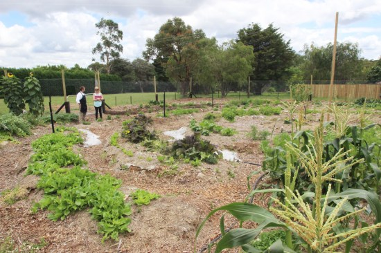 This vegetable garden is two months old and already producing volumes of vegetables