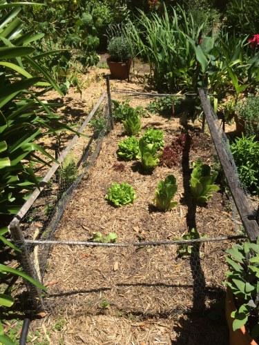 A veggie patch