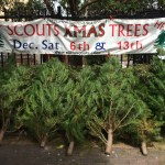 Scouts' Christmas Trees