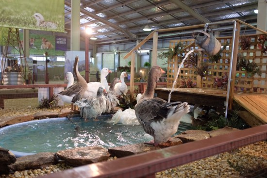 The geese have their own water feature