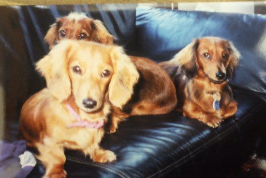 Ruby and Rosie with Matilda, one of Ruby's puppies