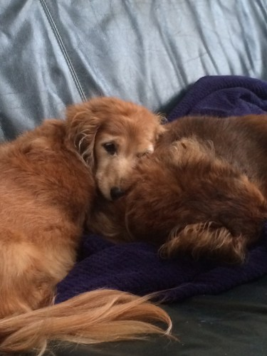 One last cuddle