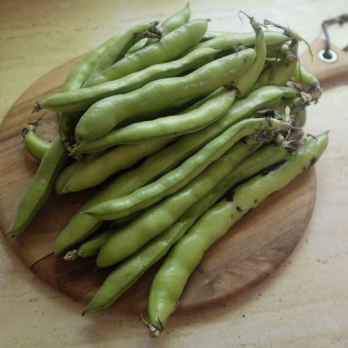 Broad (flava) beans