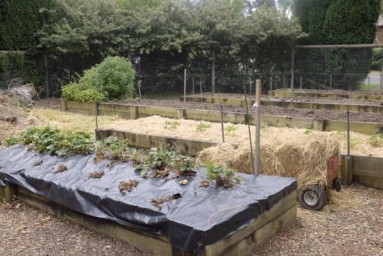 Part of the vegetable garden