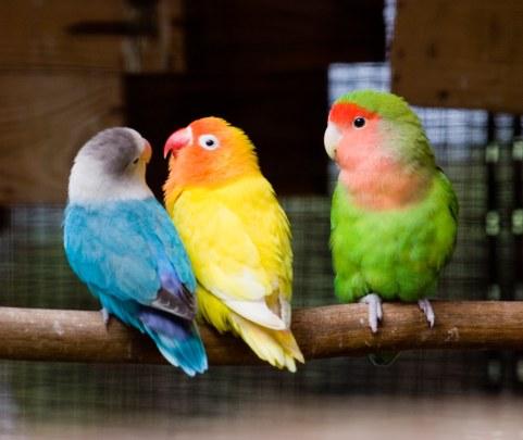 crazy birds green blue yellow