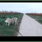 Wer bekommt die Sache Hund bei Trennung – RechtsTipp24.tv