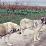 Hunde aus benachbarten Bundesländern aus dem Tierheim holen