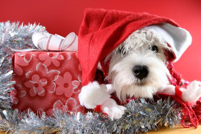 Dear Santa… I want a puppy!