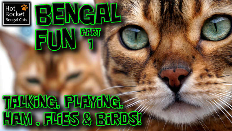 Bengal Fun (part 1)