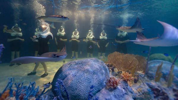 Underwater seatrek odysea aquarium