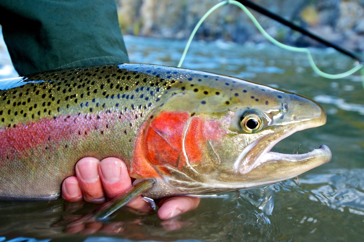 River Fishing for Trout