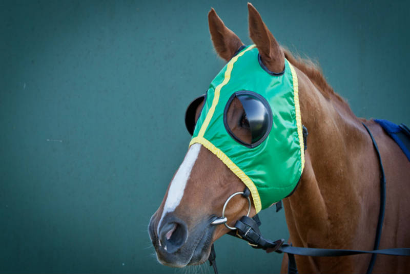 Image result for horse racing HEAD GEAR