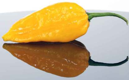Yellow Fatalii Hot Pepper Seeds