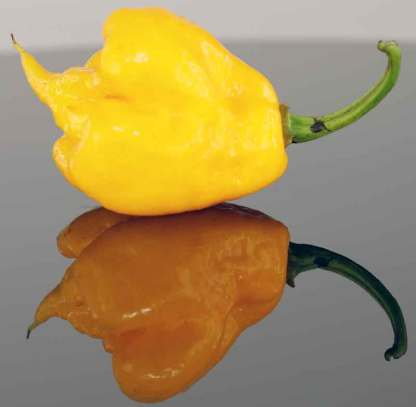 Yellow Trinidad Moruga Scorpion Seeds