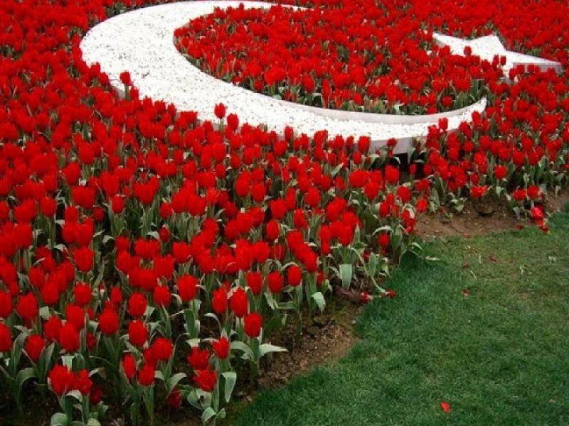 Туры в апреле в Турцию тюльпан