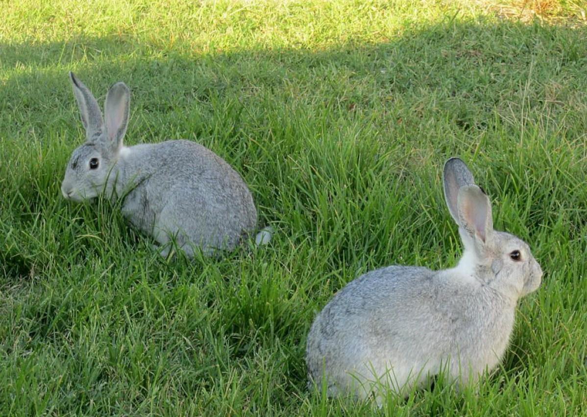 Кролики ппп