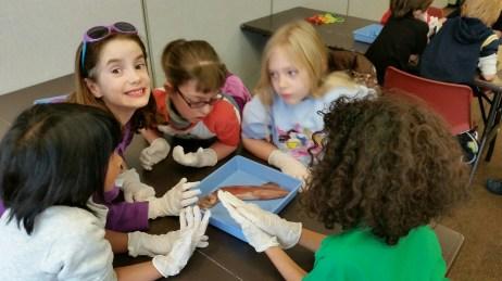 Dissecting squids