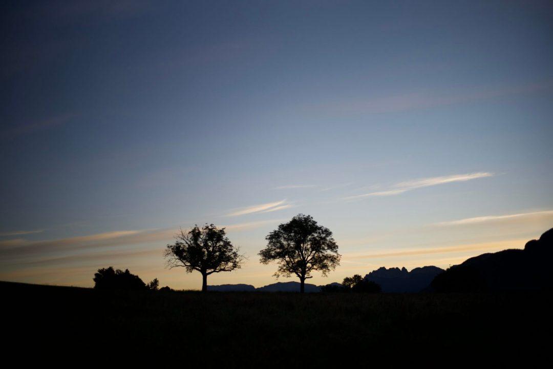 Ces 2 arbres à Leschaux que j'ai pris en toute saison par tous les temps